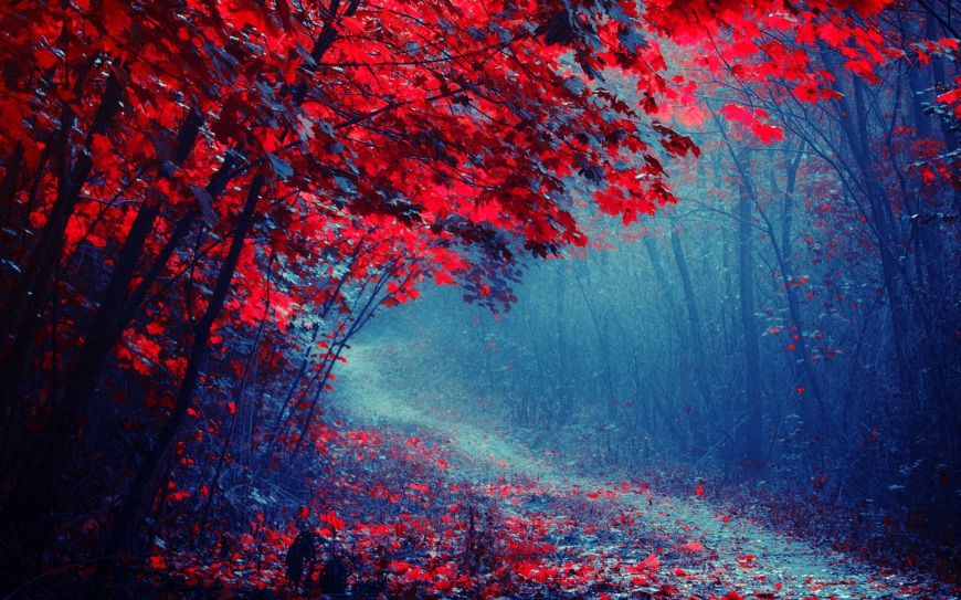 red-leaves-forest-road-trees-autumn-mist-trail